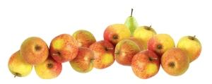 aepfel-und-birnen